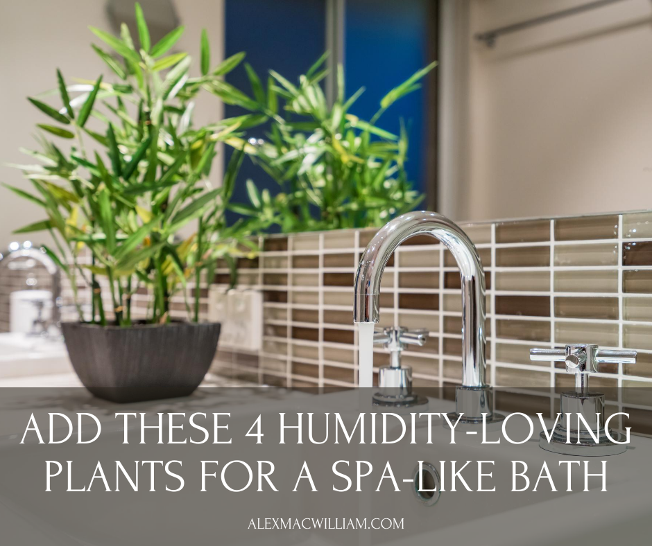 Want a Spa-Like Bathroom - Add Greenery With These 4 Humidity-Loving Plants