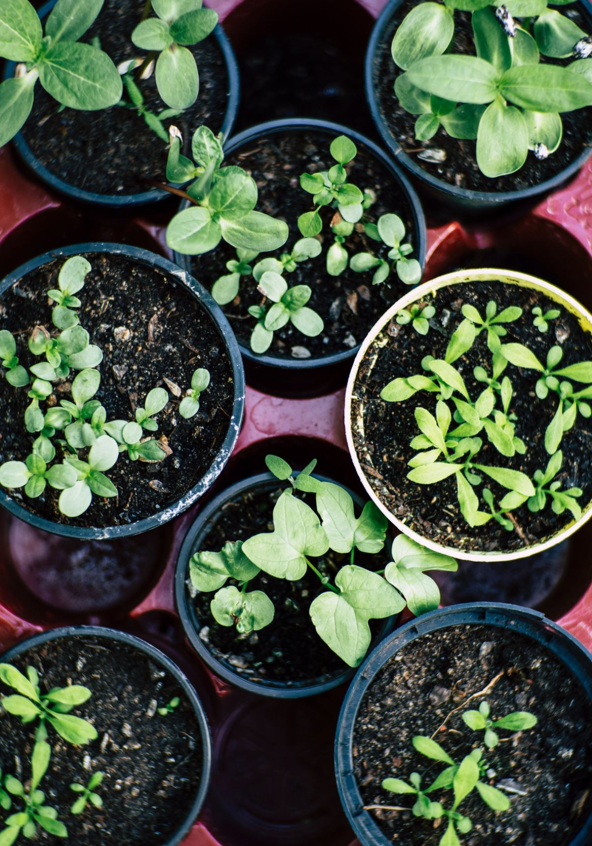 Realtor Magazine 2020 08 28 Five Design Trends emerging after the COVID-19 Coronavirus pandemic Hoey Team eXp Realty Gardening a new hobby