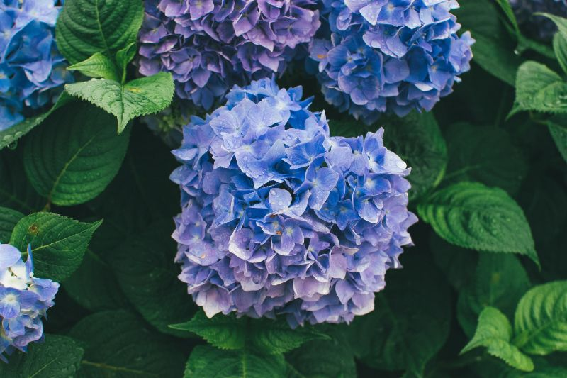 vibrant blue flower on green bush