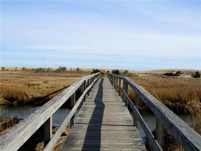 wooden bridge heading to beach