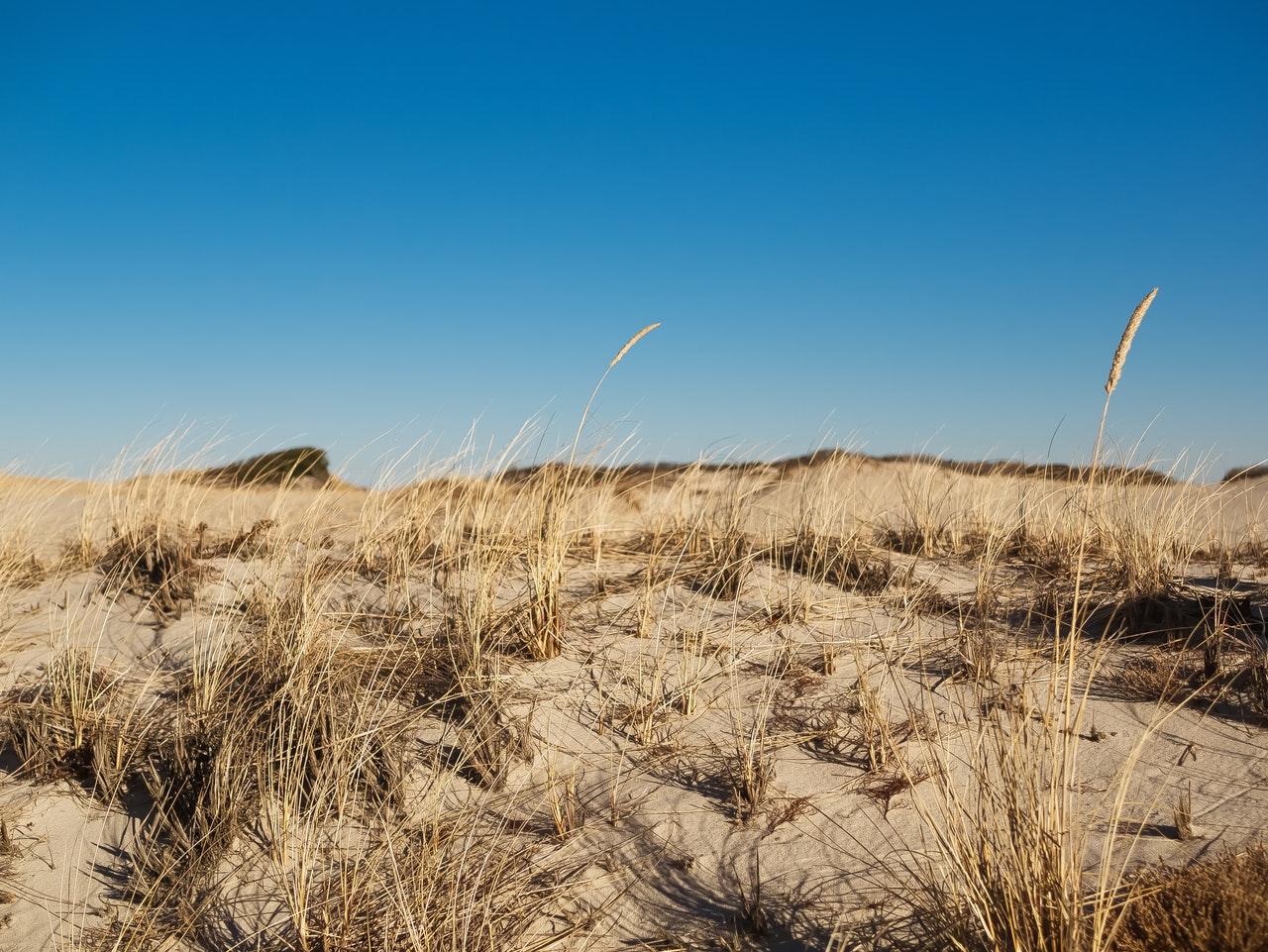 tall grass on beach