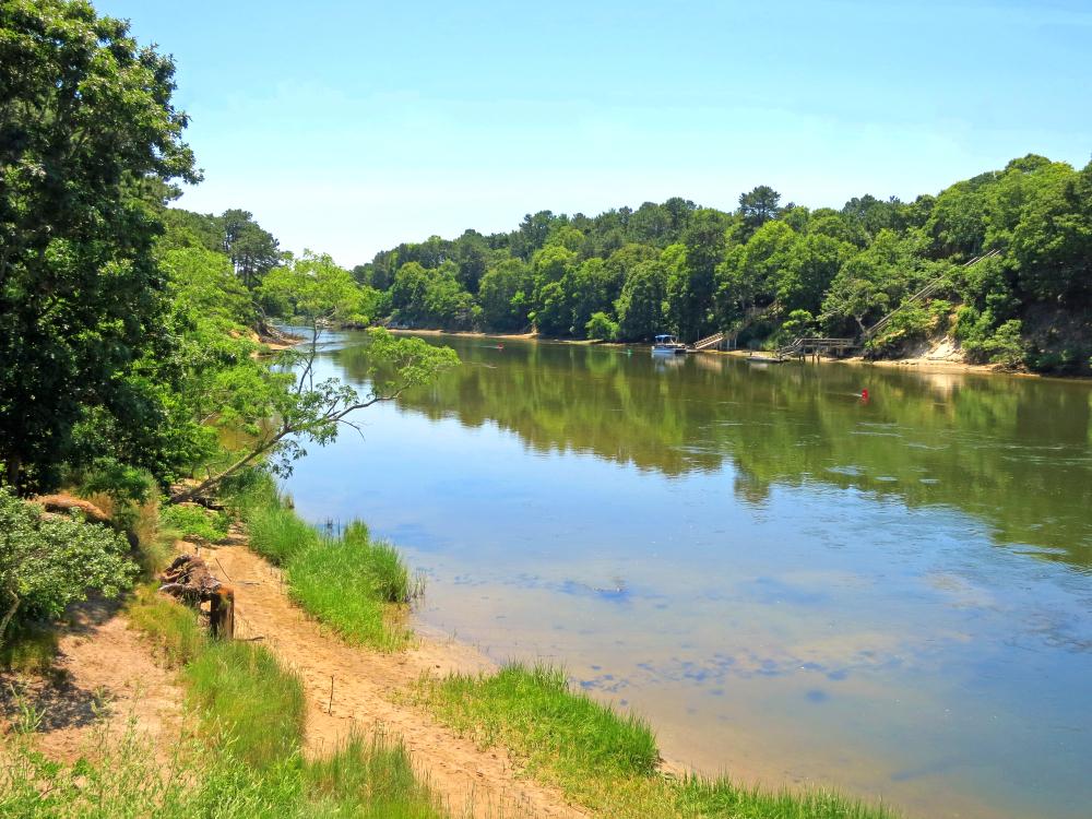 trees along river bank