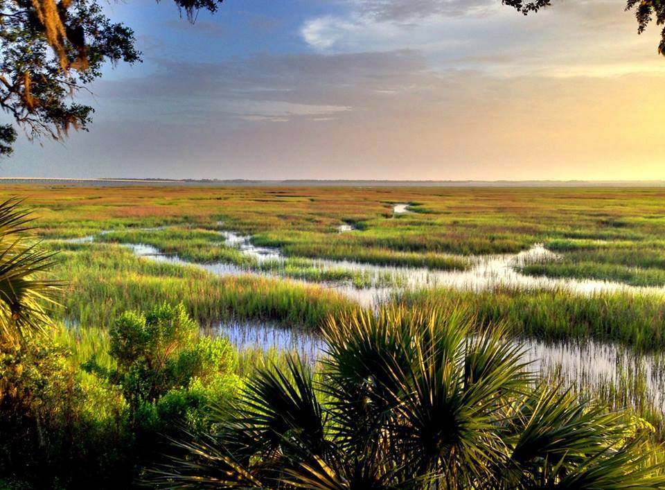 South Carolina Salt Marshes: More than just a view