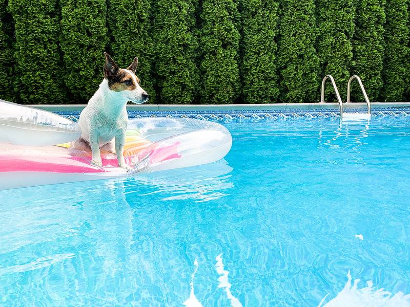 Dog floating on pool toy