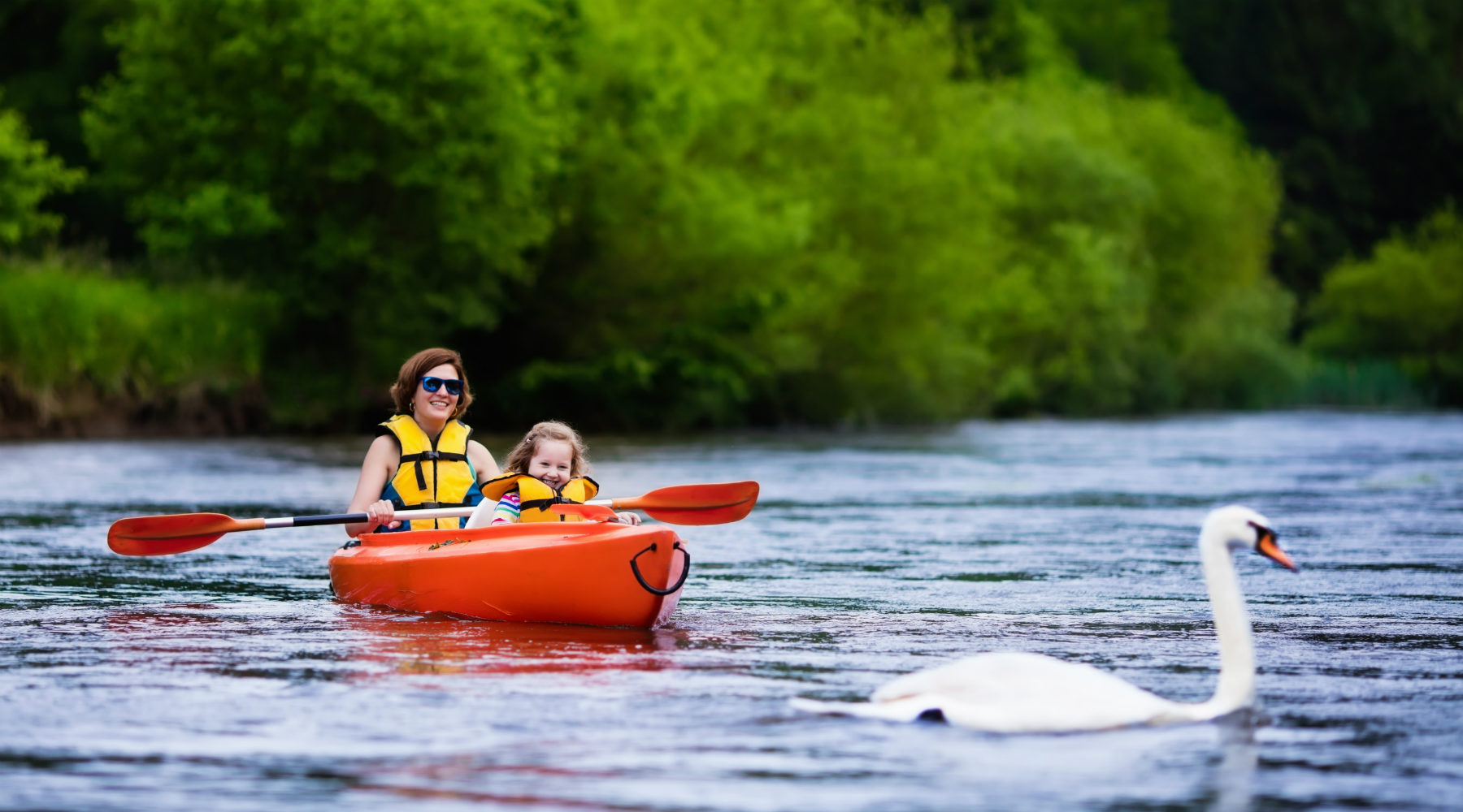 Woman and child kayaking with swan on river
