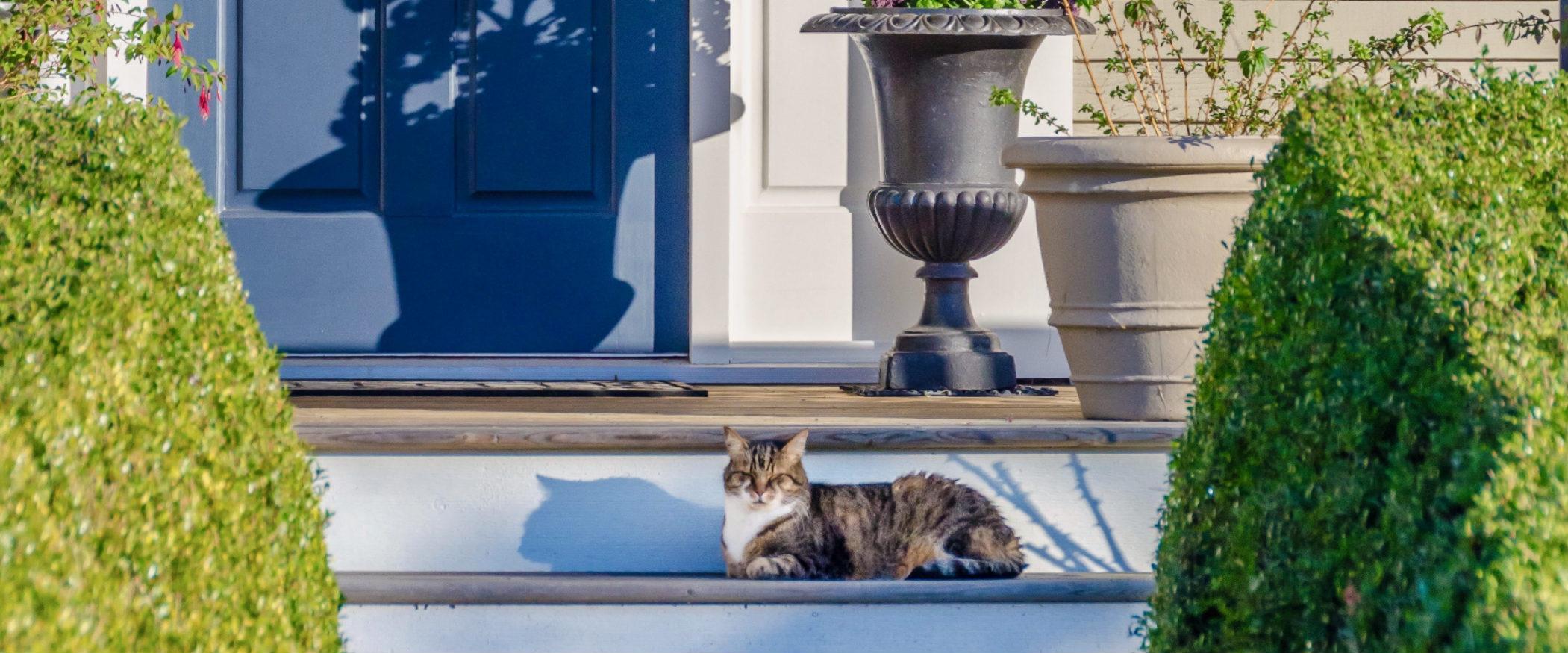 Blue front door cat on steps