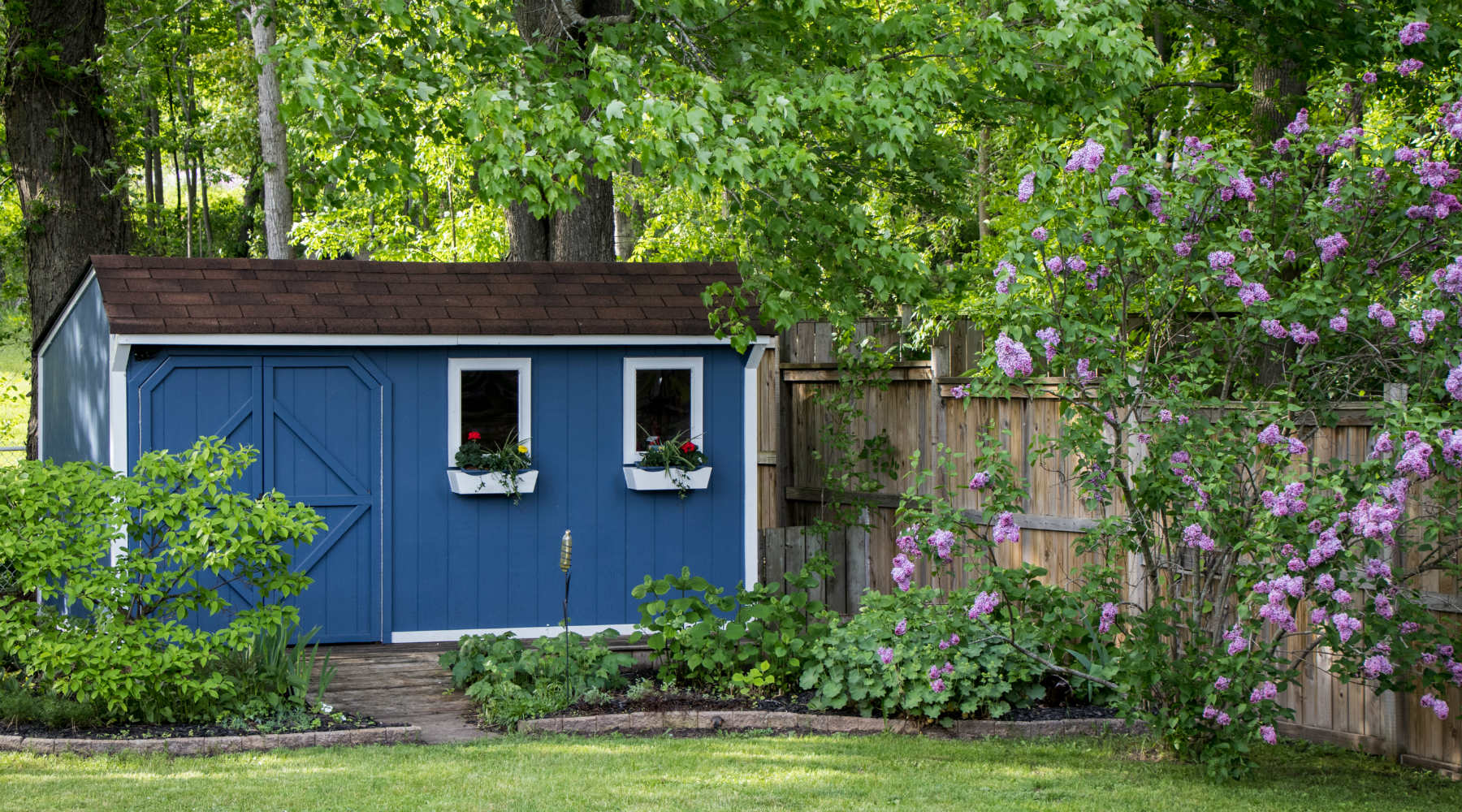 Blue shed backyard with lilacs