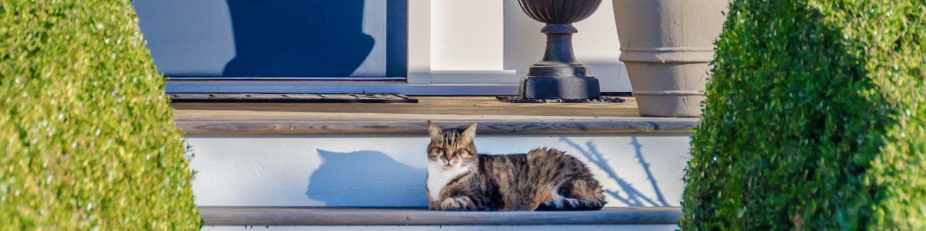 Blue front door porch cat on steps