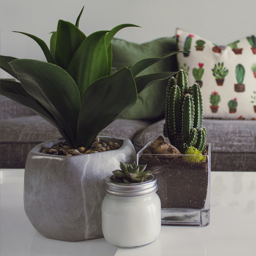 geometric pots for plants