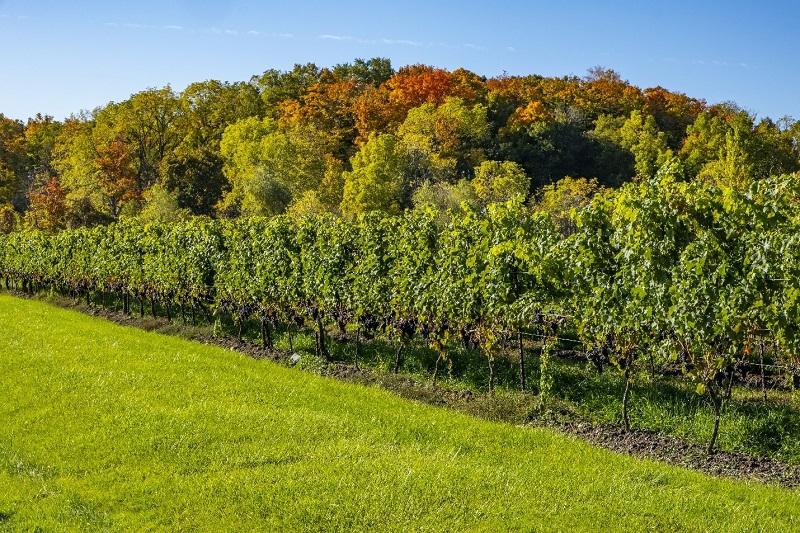 5 Reasons You Should Move to Niagara Region