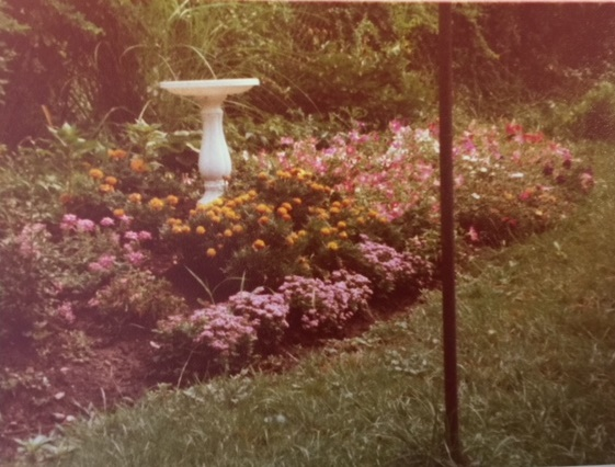 Garden at my childhood home.