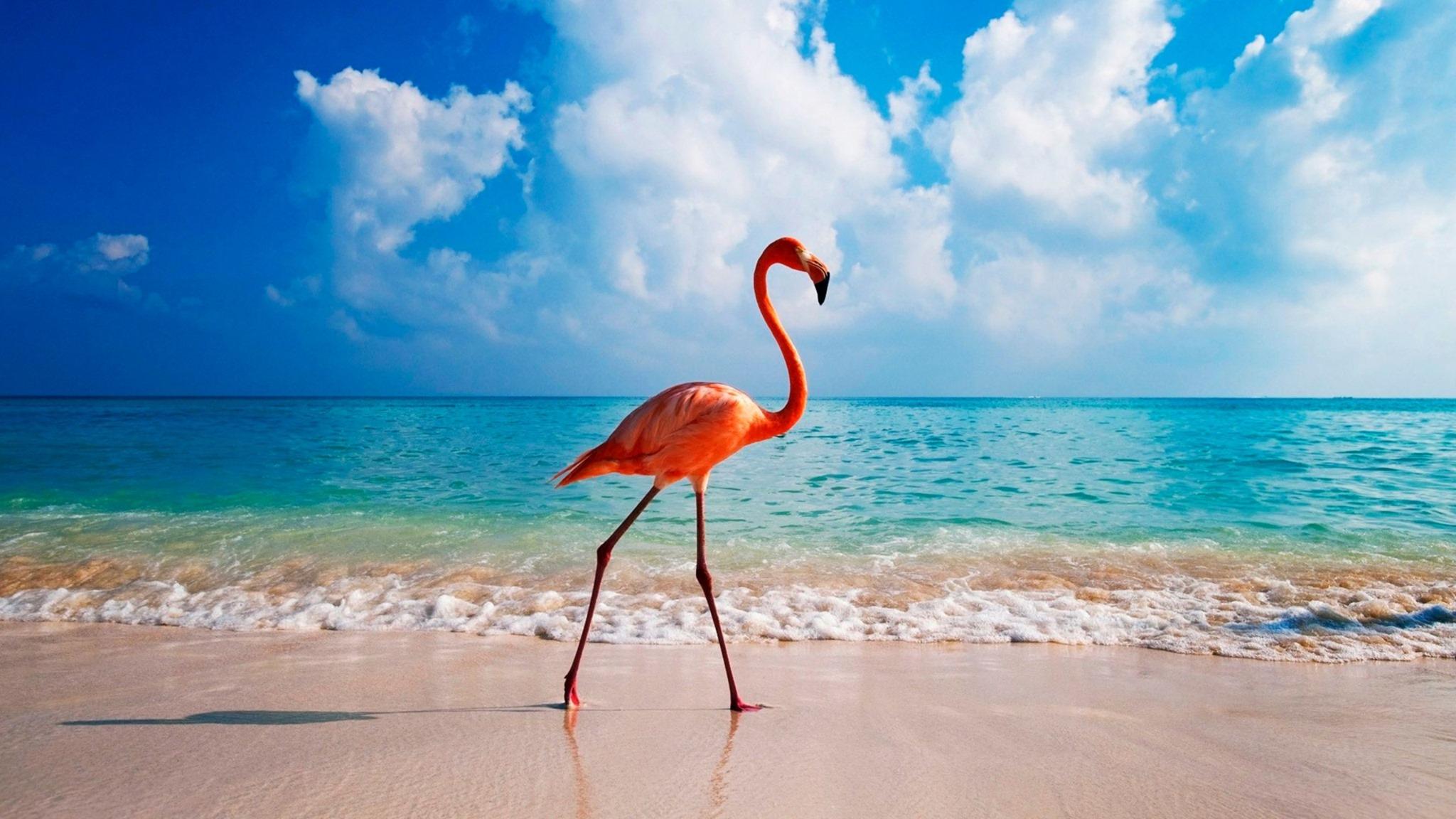 flamingo on the beach sand