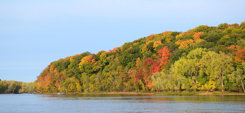 Fall tree lined hill