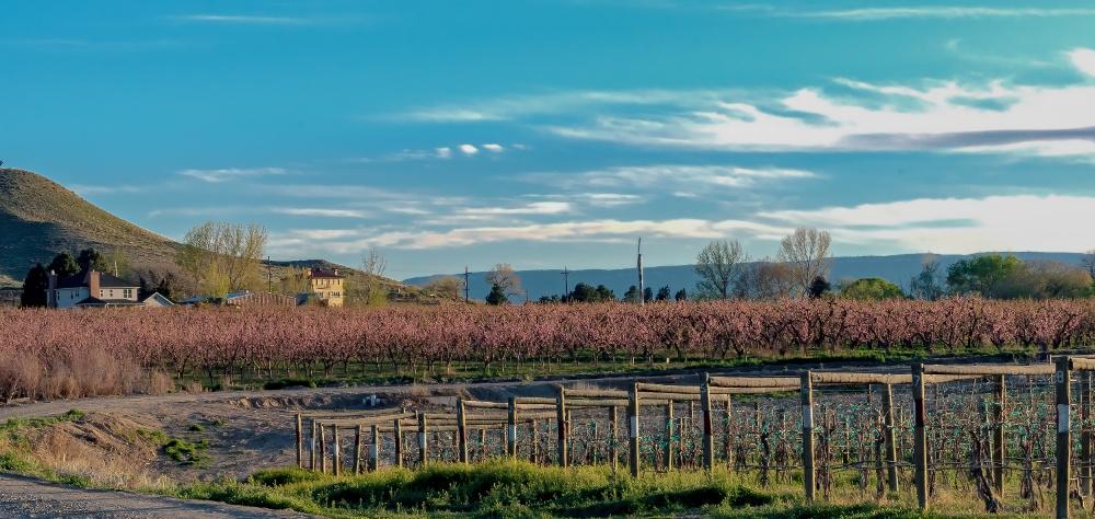 Orchard Mesa Colorado