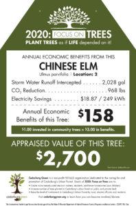 Tree tag example